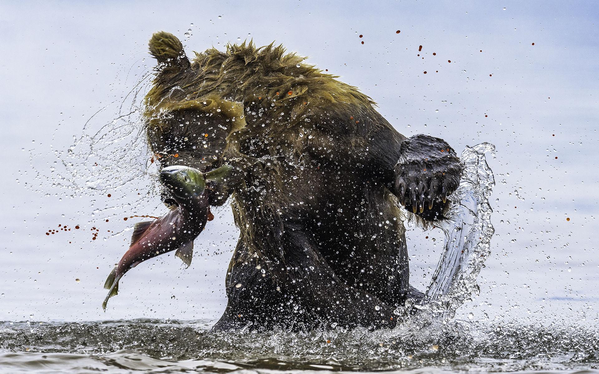 Vinnerbilder Oktober 2020 – Rovpattedyr