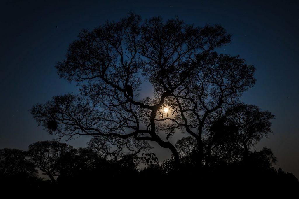 Vinnerbilder Desember 2020 – Nattas natur