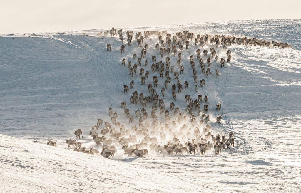 Vinnerbilder Februar 2021 – Dyr og fugl i miljø
